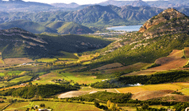Canarelli, Leccia, Nicrosi : trois sommets du vignoble Corse