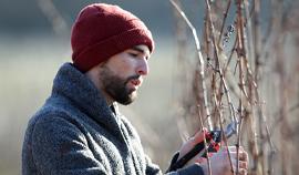 André Ostertag : l'artiste vigneron du Bas-Rhin