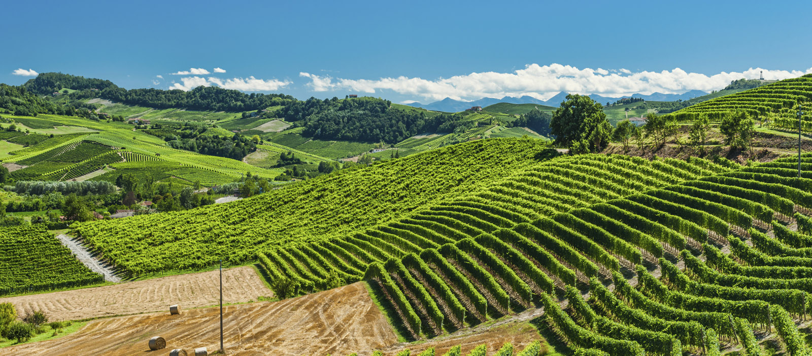 Ventes priv es vins blancs et champagnes la route des blancs - Meilleur vente privee ...